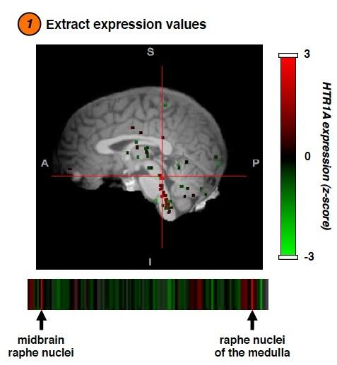 Bradley Voytek brainSCANr Allen Brain Atlas
