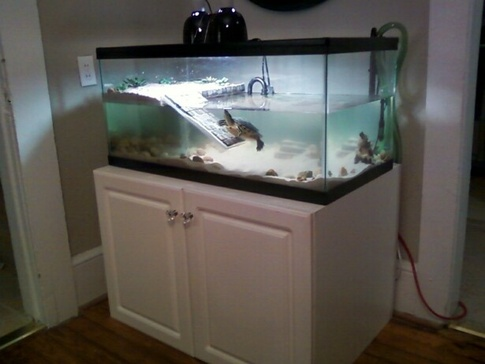 What Is The Optimum Height Distance For A Turtle S Basking Light Quora